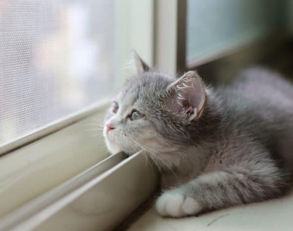Кошки и одиночество
