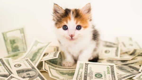 Кот и финансовое благополучие