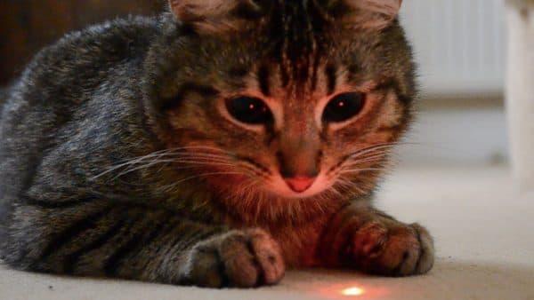 Лазерная указка для кошек. Почему кошкам нравится читайте статью