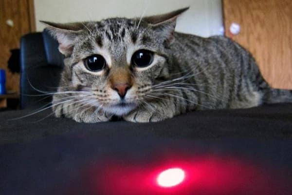 Лазерная указка для кошек. Почему кошкам нравится