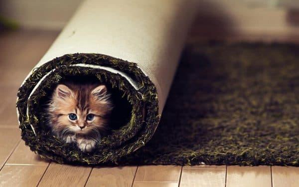 Можно ли есть кошек читайте статью