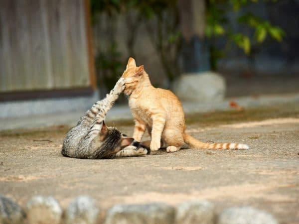 Можно ли есть кошек и кошачье мясо