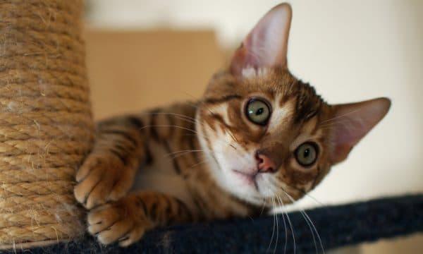 Народные приметы и суеверия о котах