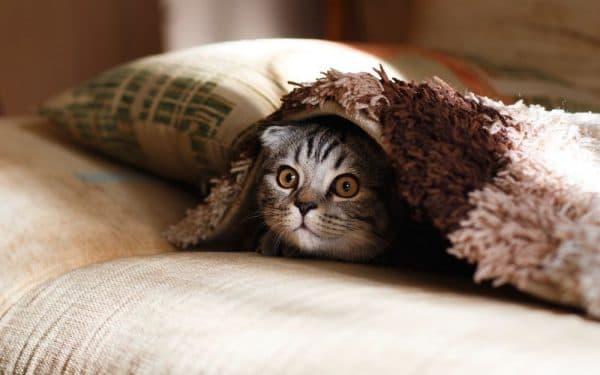 Почему кошка прячется под одеяло. Топ 7 причин