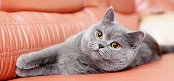 Почему кошки мурлыкают читайте статью