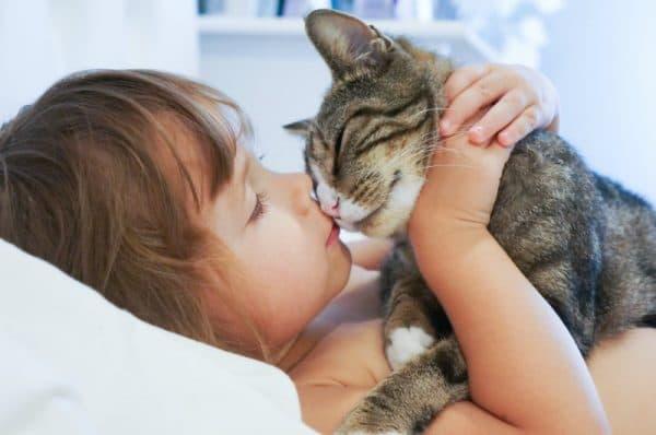 Почему нельзя целовать кошек читайте статью