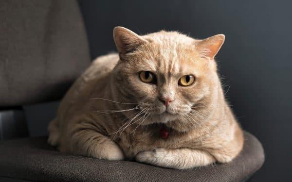 Почему у кошек 9 жизней читайте статью