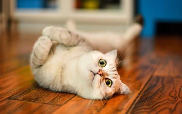 Почему в доме не приживаются кошки читайте статью