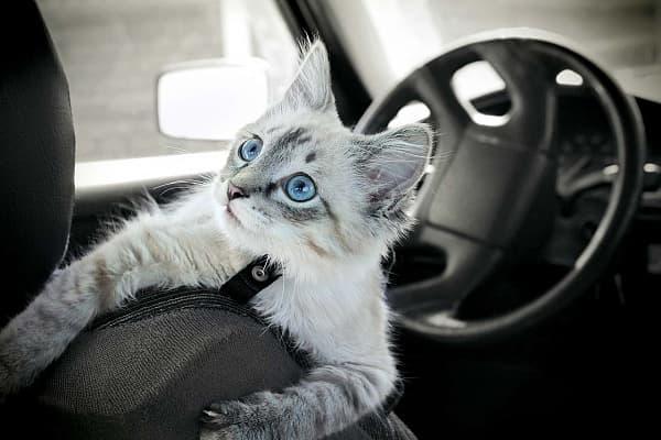 Подготовка кота к поездке