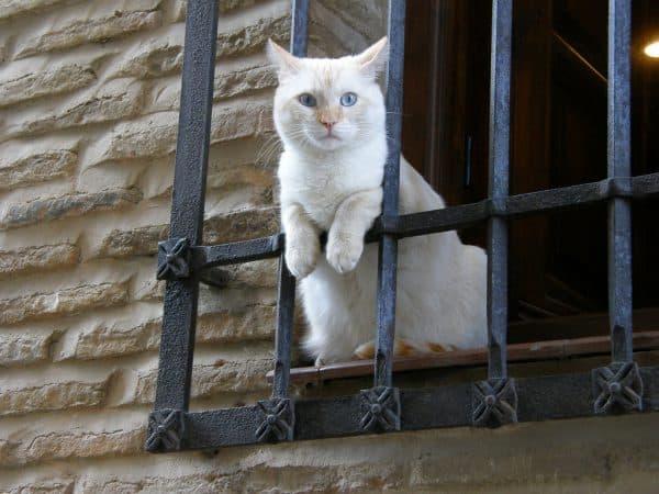 Полезно ли мясо котов