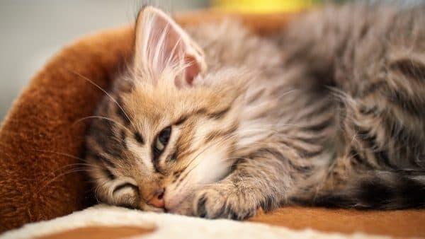 Поведение здорового котенка