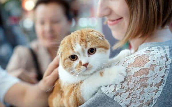 Какие люди любят кошек психология thumbnail