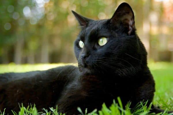 Суеверия о черных кошках