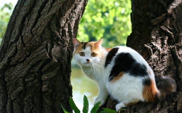Трехцветная кошка. Приметы читайте статью