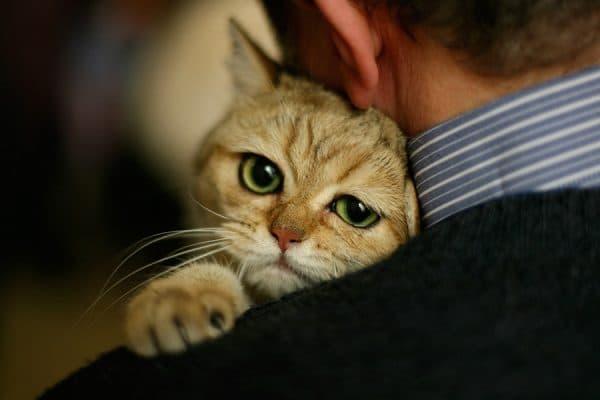 В доме не приживаются кошки в чем причина