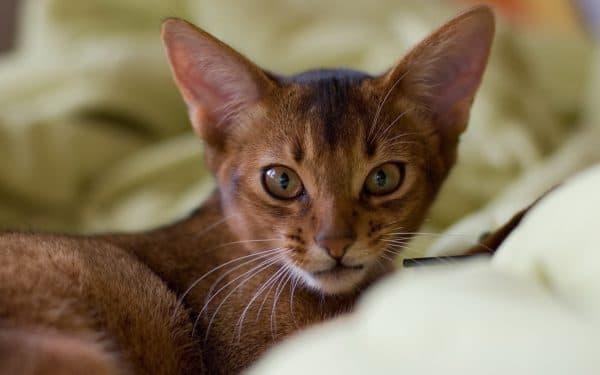 Всемирный день кошек читайте статью
