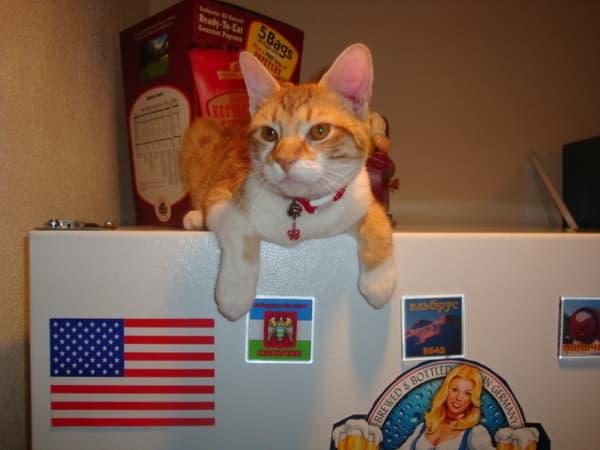 Всемирный день кошек в Соединенных Штатах Америки