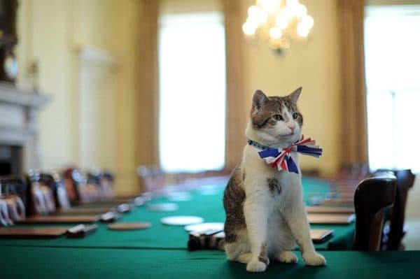 Всемирный день кошек в Великобритании