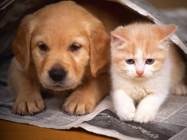 10 причин почему кошки лучше собак читайте статью