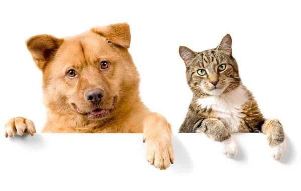 10 причин почему кошки лучше собак