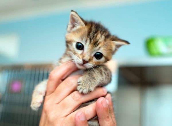Чем кормить котенка в 1 месяц без кошки читайте статью