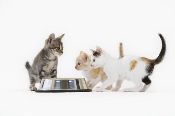 Чем кормить котенка в 2 месяца читайте статью