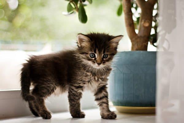 Чем кормить запрещено котенка