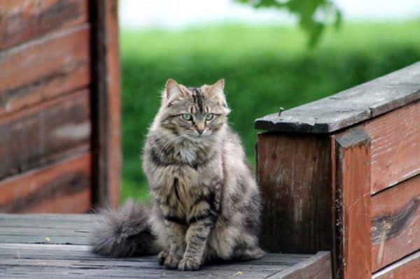 Что делать если потерялась кошка читайте статью