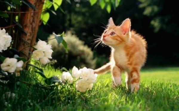 Что делать если потерялся кот