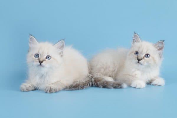 Какие продукты запрещены котикам и почему