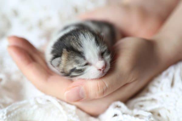 Кормление котят в 3 недели без кошки читайте статью