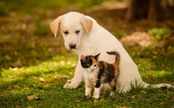 Кошка и собака, кого же лучше заводить