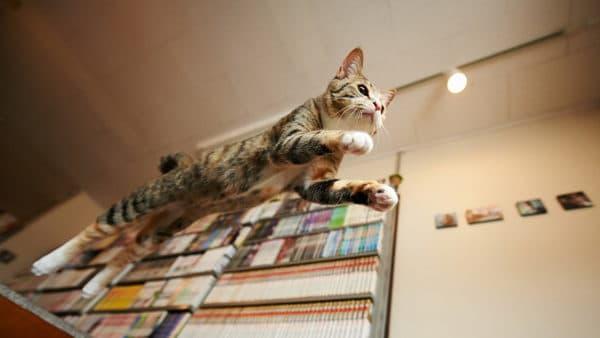 Кот носится по квартире