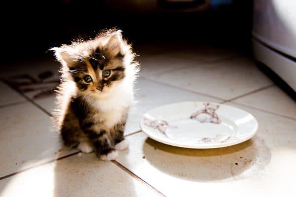 Котенок 1,5