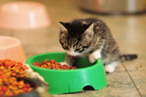 Котенок ест сухой корм