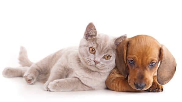 Котики лучше собак
