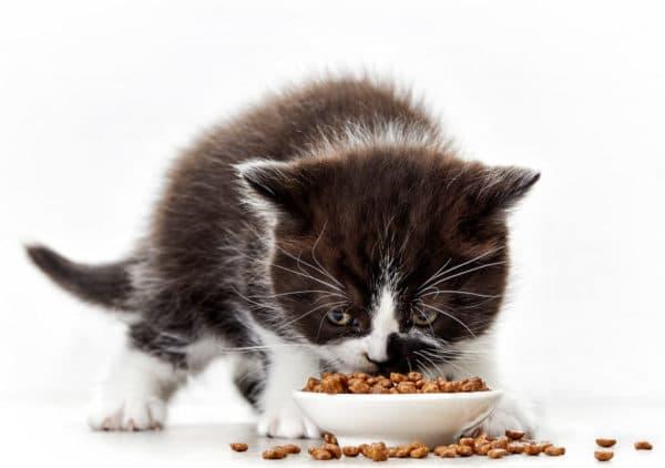 Можно ли давать котятам сухой корм читайте статью