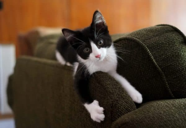 Неприятный запах от кошки