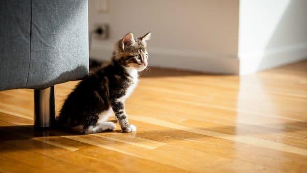 Неприятный запах от кошки. Причины и методы устранения читайте статью