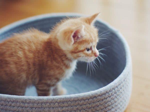 Особенности кормления котят разных пород