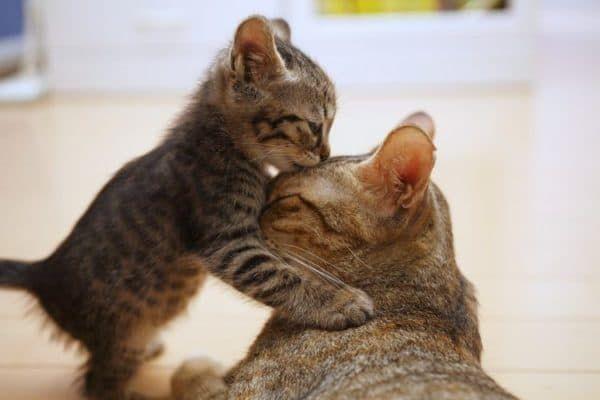 Особенности рациона для котят