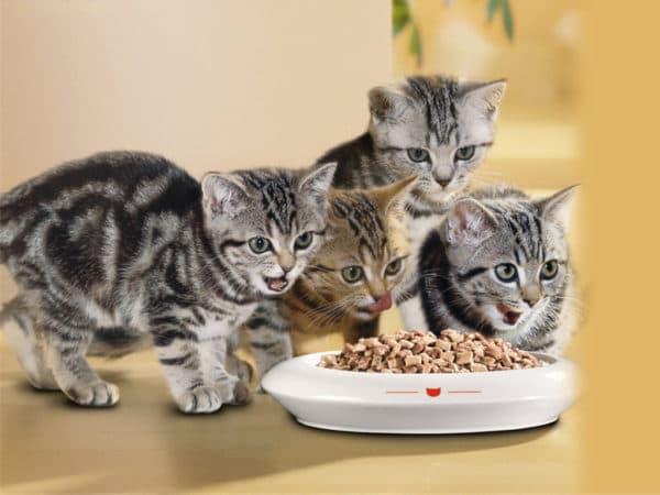 Питание котенка в 2 месяца