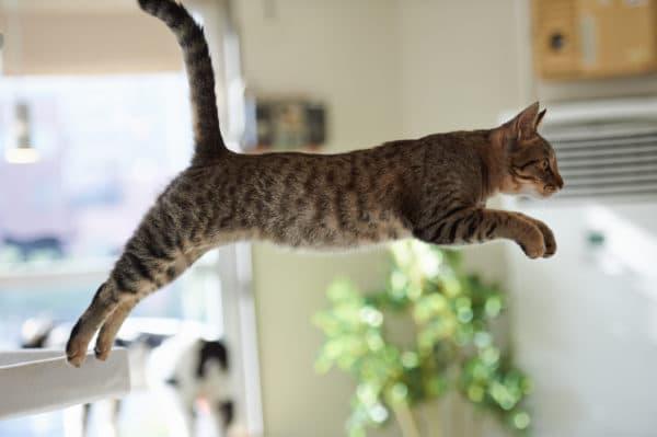 Почему кот носится по квартире
