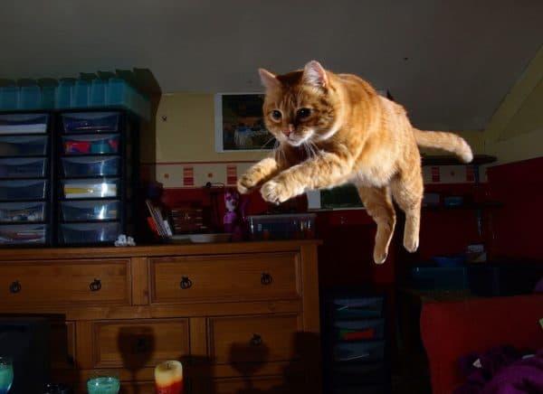 Почему кот носится по квартире как ненормальный