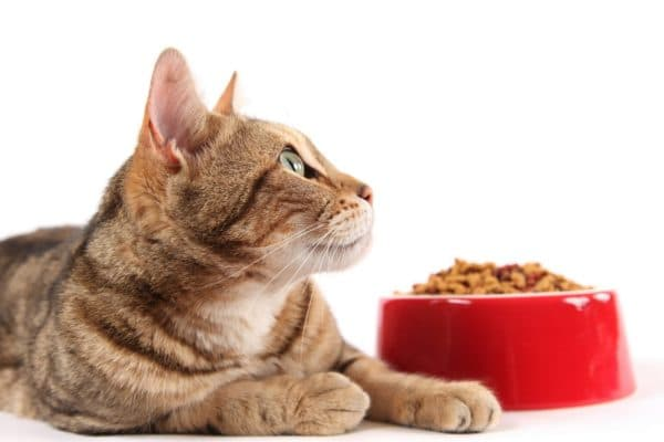 Правильное кормление котенка в 3 месяца