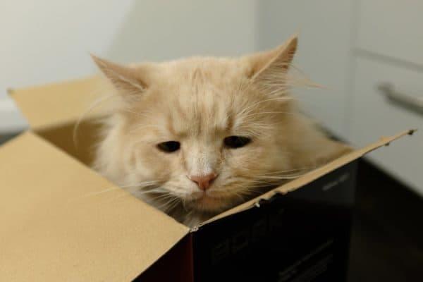 Разочарованный котик