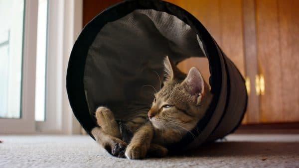 Запахи от кошки причины