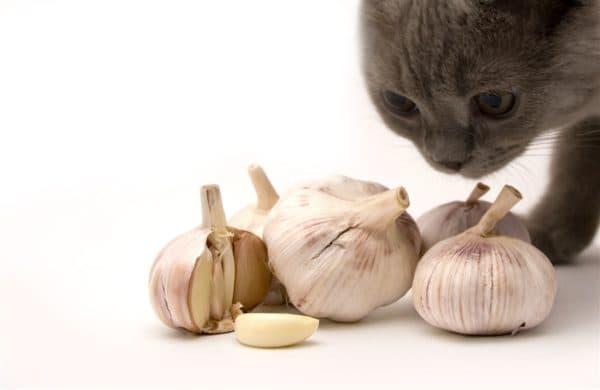 Чеснок кошке от глистов