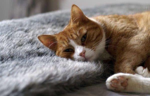 Гигиена кошки-роженицы