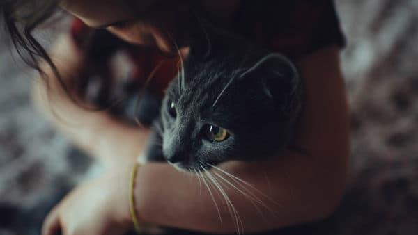 Как лучше приучить кошку к рукам читайте статью